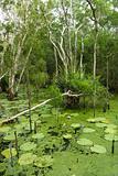 Lush wetlands.