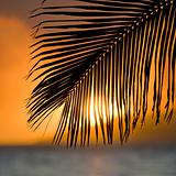 Palm frond sunset.