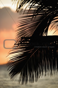 Palm frond silhouette.