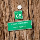 Redwood tree sign