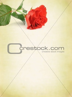 background with decorative rose