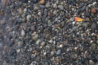 Autumn leaf on bed of pebbles