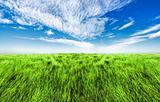 Simple high grass horizon