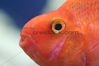 a fish's head side view