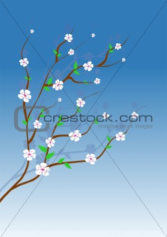 Almond tree white flowers
