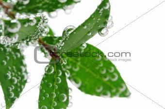 Green leaves in water