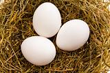 Three white eggs in a nest