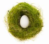 Egg in a green nest