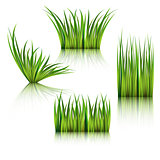 Fragments of the green grass isolated on white.