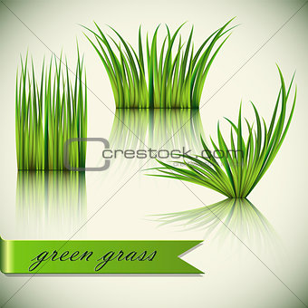 Fragments of the green grass.
