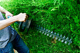 young man pruning a hedge