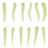 Fern leaves. Set