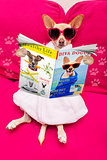dog spa wellness reading magazine