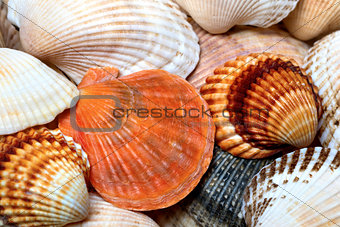 Background of seashells