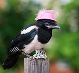 Bird in hat with jewelry