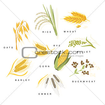 Cereal Plants With Names Set