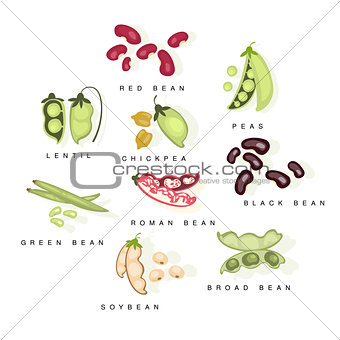 Bean Cultures With Names Set