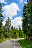 Free Road among Beautiful Forest in the National Park Durmitor, Montenegro