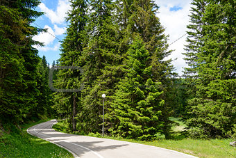 Free Road among Beautiful Forest in the National Park Durmitor,