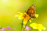 macro shot with orange butterfly on yellow flower