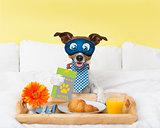 Hotel room service wtih dog