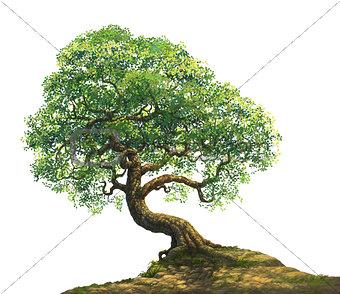 a big tree on hill
