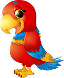 cheerful red parrot