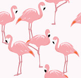 Vector Flamingo Bird