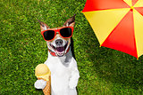 dog with ice cream under umbrella