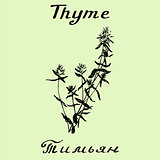 Vector hand drawn thyme illustration. Botanical drawing