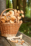 Basket with mushrooms on the table