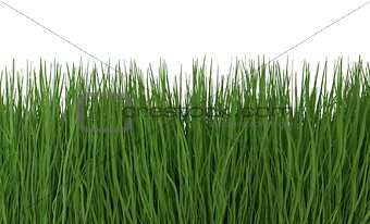 Green grass isolated on white 3d illustration