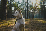 Young dog in the forest