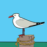 Sea gull sitting on the pier