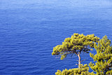 Top view on blue sunlight sea at sun day