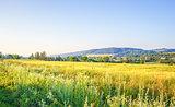 Realistic rural landscape