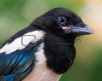 Close view of bird
