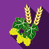 Fruit hops and ears of barley on a purple background with long shadow. The symbols of the Oktoberfest.