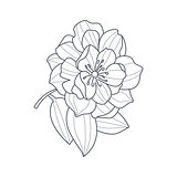 Fully Open Peony Flower Monochrome Drawing For Coloring Book