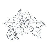 Dog Rose Flower Monochrome Drawing For Coloring Book