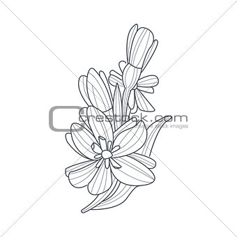 Daffodil Flower Monochrome Drawing For Coloring Book