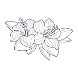 Hibiscus Flower Monochrome Drawing For Coloring Book
