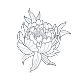 Peony Flower Monochrome Drawing For Coloring Book