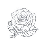 Rose Flower Monochrome Drawing For Coloring Book