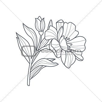Calendula Flower Monochrome Drawing For Coloring Book