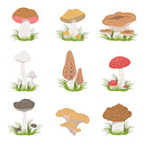 Different Mushrooms Realistic Drawings Set