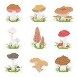 Different Mushrooms Realistic Drawings Set