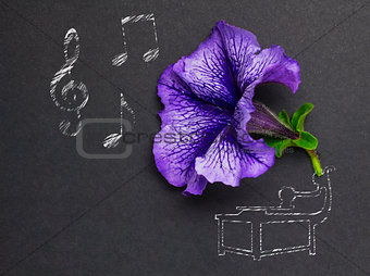 Beauty of music.
