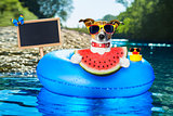 beach dog with watermelon
