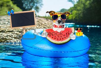 beach dog with watermelon